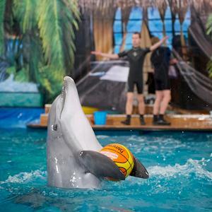 Дельфинарии, океанариумы Кабардинки
