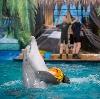 Дельфинарии, океанариумы в Кабардинке