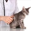 Ветеринарные клиники в Кабардинке